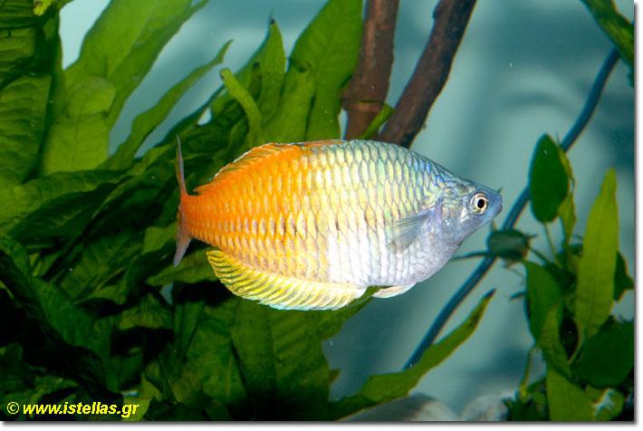 ιστοσελίδα γνωριμιών μπλε ψάρια Πώς να επιλέξετε ένα διαδικτυακό site γνωριμιών